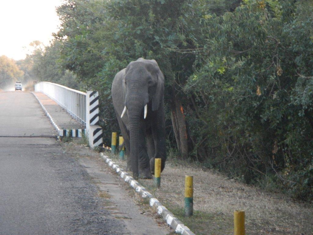 Morning traffic , Luangwa style