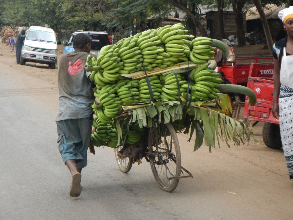 On the way to market.