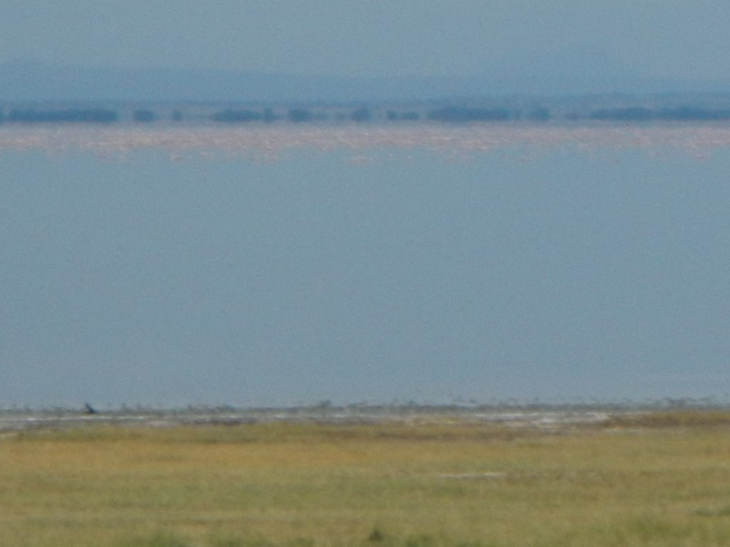 The pink of flamingos as they line the lake for as far as the eye can see.