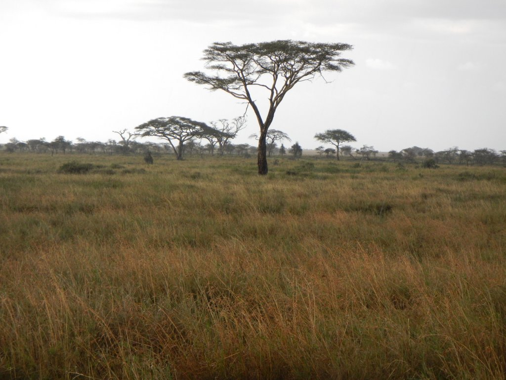 Picture perfect , the Serengeti