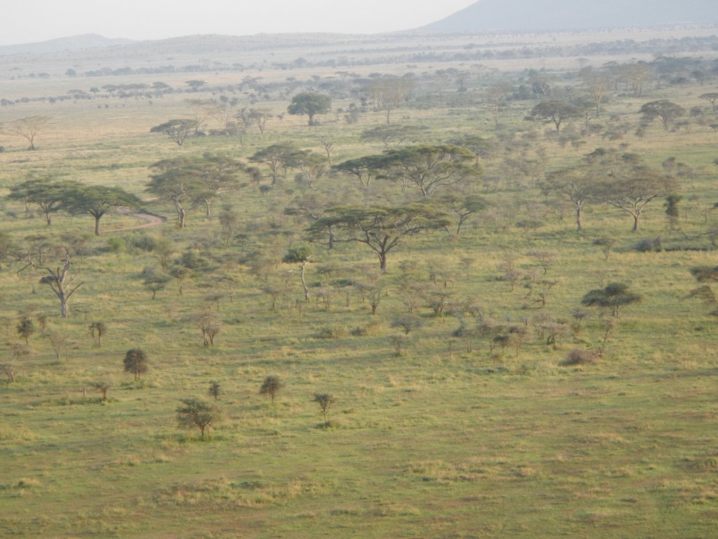 The Serengeti at her best