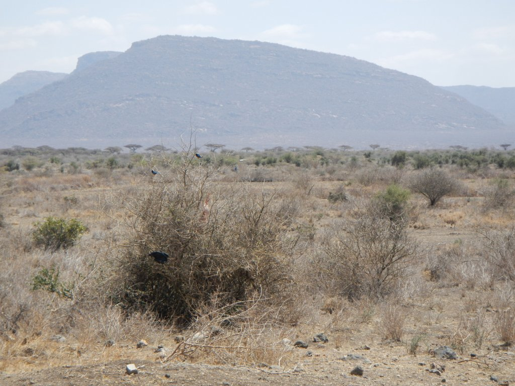 Tough land between Isiolo and Archers Post