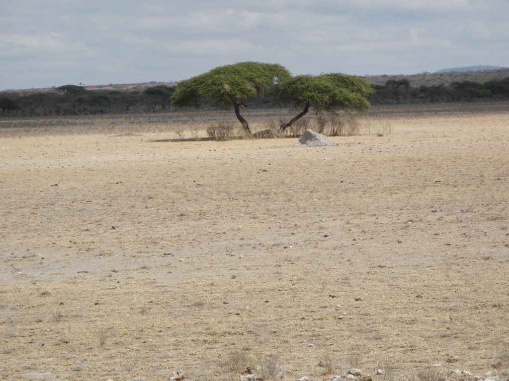 Harsh and dry , you wonder how life exists out here.