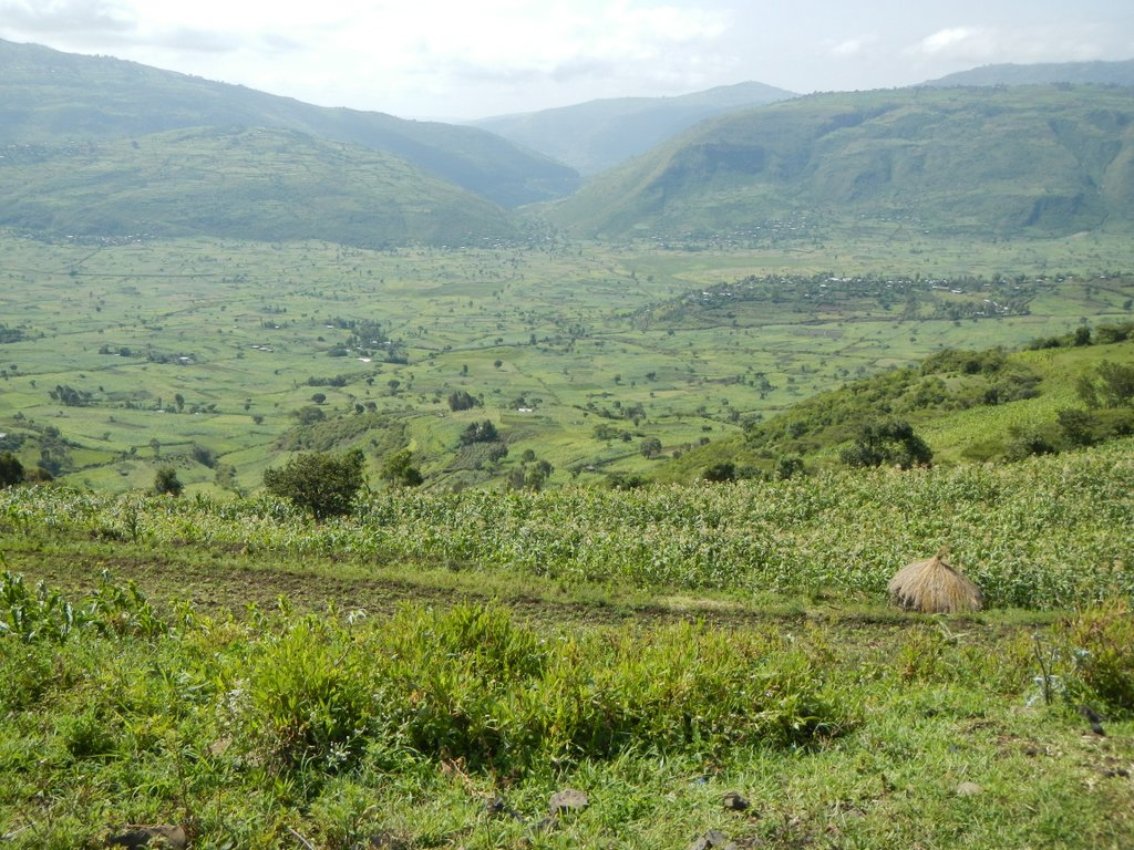The road to Harar .
